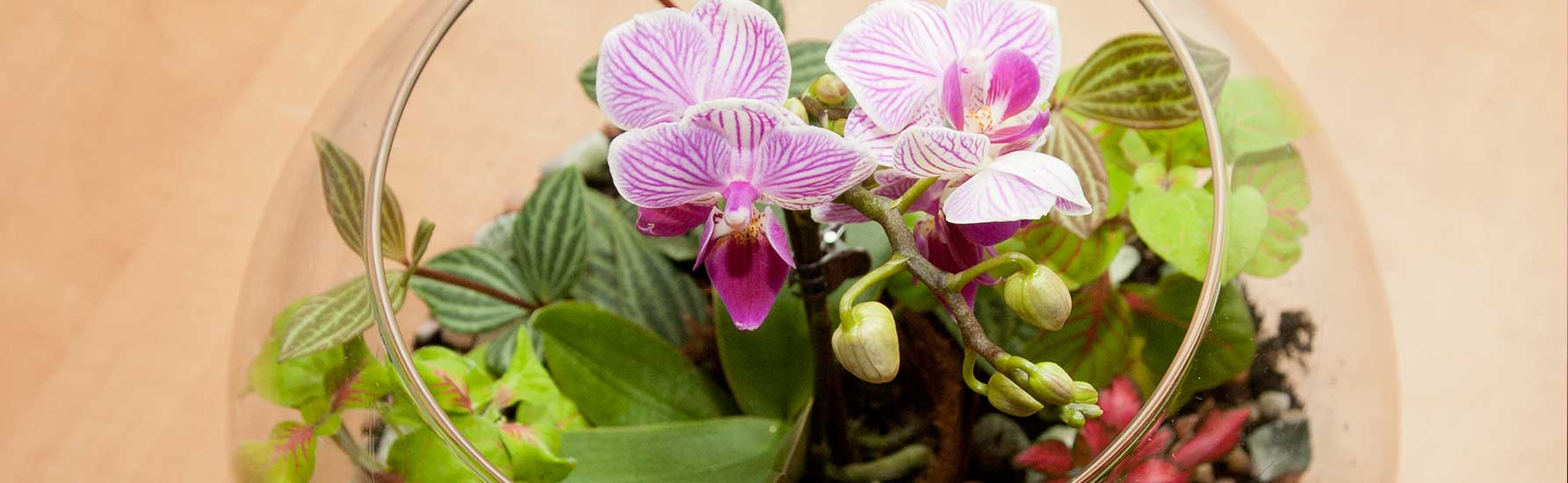 How To Grow Orchids In A Terrarium Orchidplantcare Info
