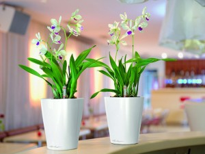Mini Orchids in Deltini