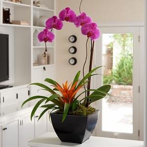 ProFlowers Orchid Bromeliad