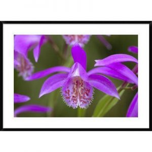 Framed orchid photo