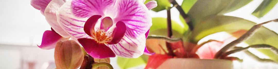 Orchids make beautiful gifts (that keep on giving!) for occasions like Mother's Day. But how can you make it a truly unique and special gift that goes ...