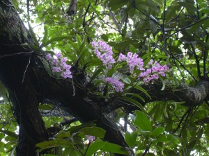how to make sandy soil to grow australian rainforest plants
